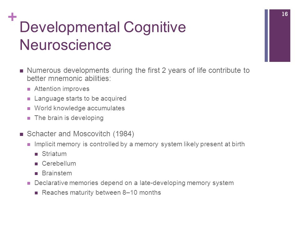 + Developmental Cognitive Neuroscience Numerous developments during the first 2 years of life contribute to better mnemonic abilities: Attention improves Language starts to be acquired World knowledge accumulates The brain is developing Schacter and Moscovitch (1984) Implicit memory is controlled by a memory system likely present at birth Striatum Cerebellum Brainstem Declarative memories depend on a late-developing memory system Reaches maturity between 8–10 months 16