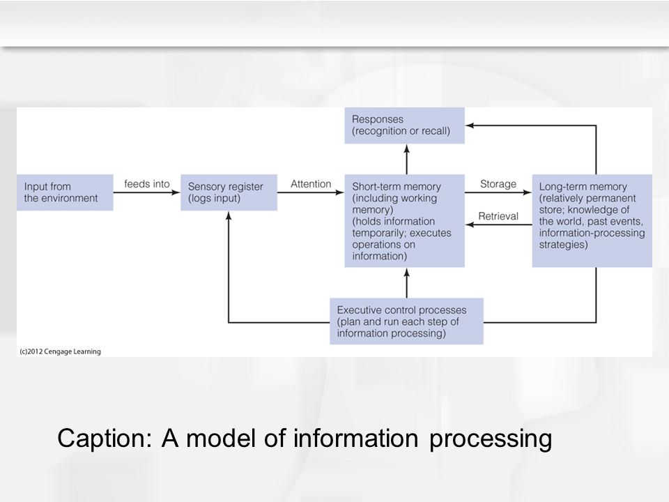 Caption: A model of information processing