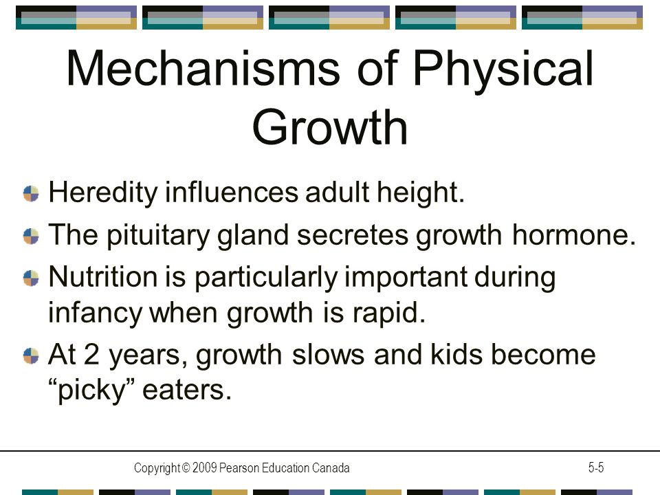 Copyright © 2009 Pearson Education Canada5-6 Challenges to Healthy Growth Malnutrition is especially damaging in infancy.