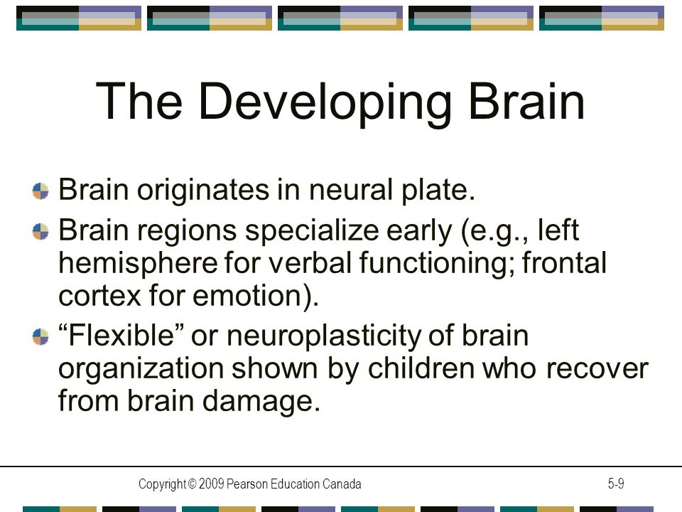 Copyright © 2009 Pearson Education Canada5-10 Module 5.3 Motor Development LEARNING OBJECTIVES State how reflexes help infants interact with the world.