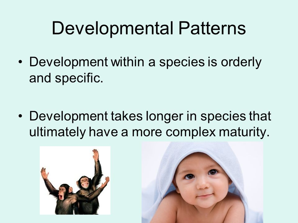 Developmental Patterns Development within a species is orderly and specific. Development takes longer in species that ultimately have a more complex m