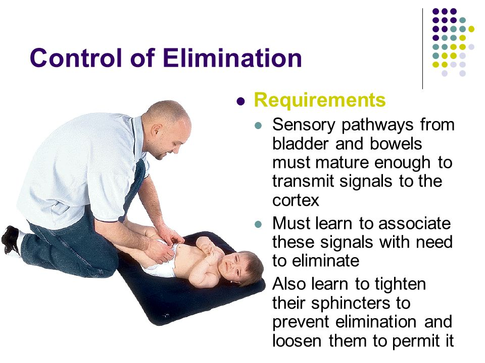 Control of Elimination Requirements Sensory pathways from bladder and bowels must mature enough to transmit signals to the cortex Must learn to associate these signals with need to eliminate Also learn to tighten their sphincters to prevent elimination and loosen them to permit it