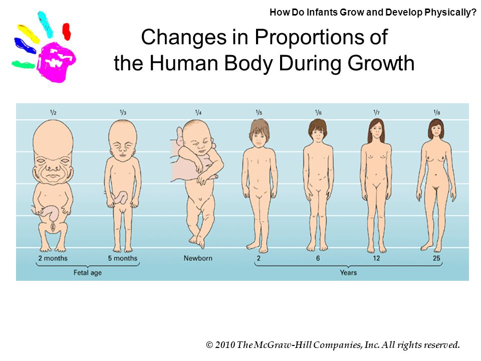 © 2010 The McGraw-Hill Companies, Inc. All rights reserved. Changes in Proportions of the Human Body During Growth How Do Infants Grow and Develop Phy