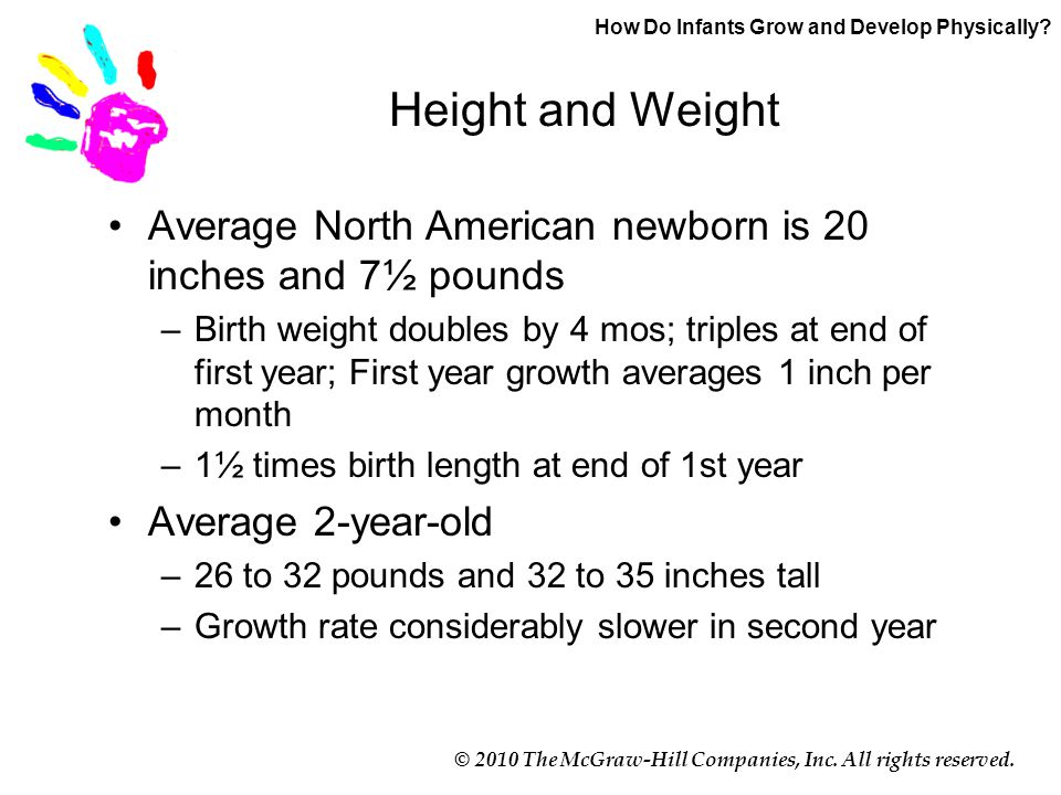 © 2010 The McGraw-Hill Companies, Inc. All rights reserved. Height and Weight Average North American newborn is 20 inches and 7½ pounds –Birth weight