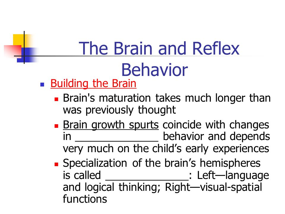 The Brain and Reflex Behavior Building the Brain Brain s maturation takes much longer than was previously thought Brain growth spurts coincide with changes in ______________ behavior and depends very much on the child's early experiences Specialization of the brain's hemispheres is called ______________: Left—language and logical thinking; Right—visual-spatial functions