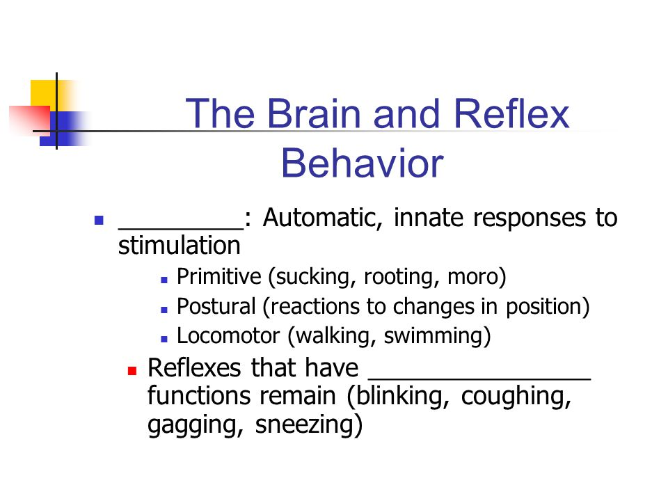 The Brain and Reflex Behavior ________________ - the coating of the neural pathways with a fatty substance called myelin, enabling signals to travel faster and more smoothly Permits the achievement of mature functioning