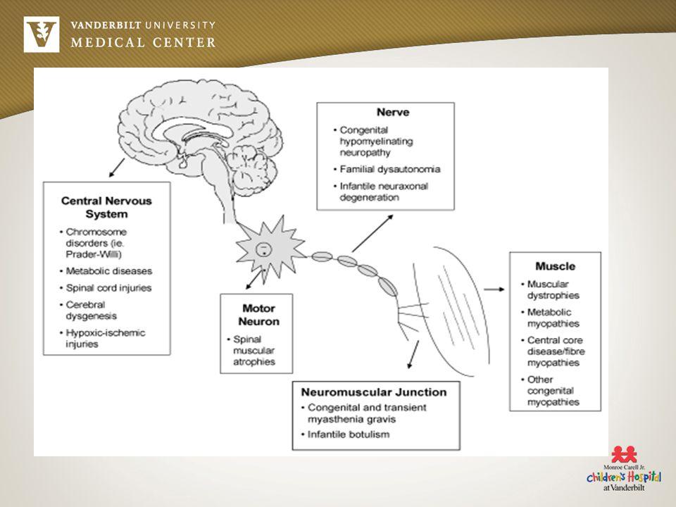 Central Causes Sepsis Maternal narcotics Hypothyroid Prematurity HIE Down s Syndrome Prader-Willi Inborn Errors of Metabolism –Zellweger Cerebral dysgenesis