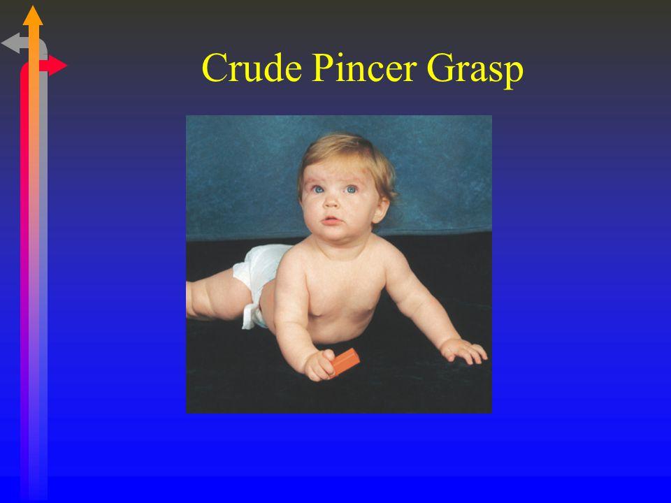 Crude Pincer Grasp