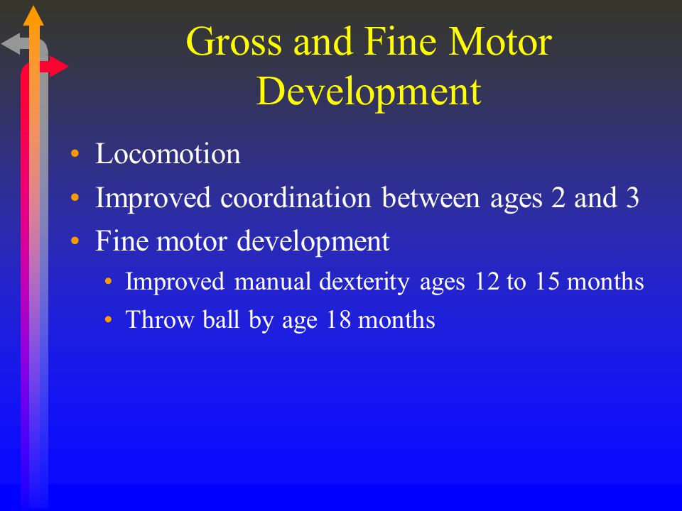 Gross and Fine Motor Development Locomotion Improved coordination between ages 2 and 3 Fine motor development Improved manual dexterity ages 12 to 15 months Throw ball by age 18 months