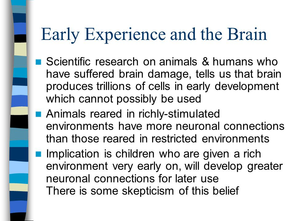 Early Experience and the Brain Scientific research on animals & humans who have suffered brain damage, tells us that brain produces trillions of cells