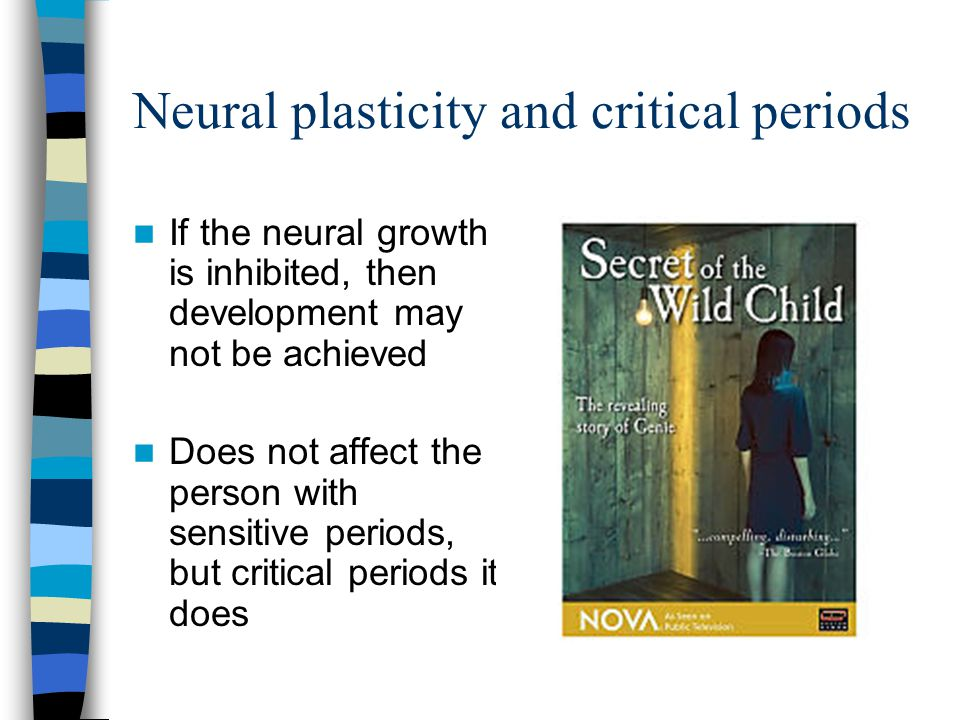 Neural plasticity and critical periods If the neural growth is inhibited, then development may not be achieved Does not affect the person with sensiti
