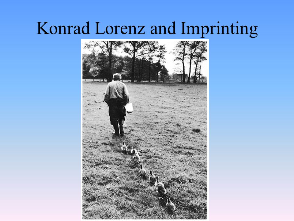 Konrad Lorenz and Imprinting