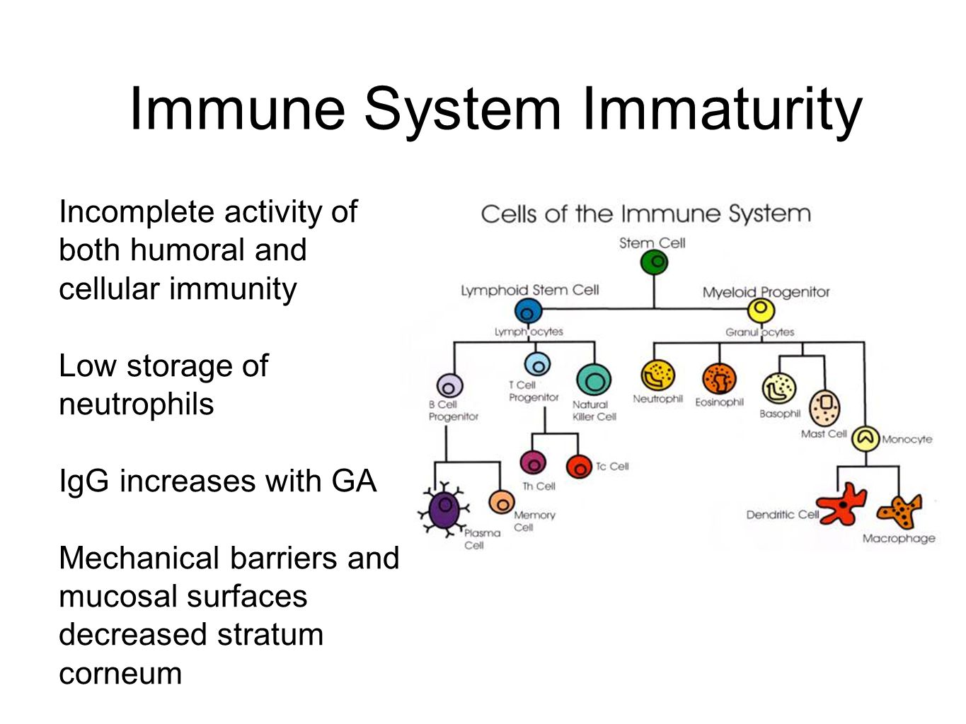 Immune System Immaturity Incomplete activity of both humoral and cellular immunity Low storage of neutrophils IgG increases with GA Mechanical barriers and mucosal surfaces decreased stratum corneum