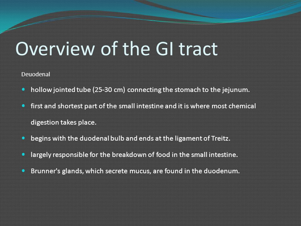 Overview of the GI tract Deuodenal hollow jointed tube (25-30 cm) connecting the stomach to the jejunum. first and shortest part of the small intestin