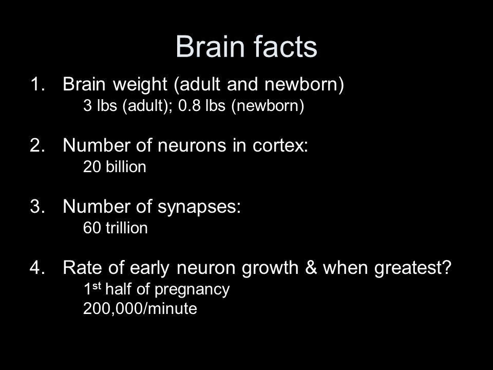 Brain facts 1.Brain weight (adult and newborn) 3 lbs (adult); 0.8 lbs (newborn) 2.Number of neurons in cortex: 20 billion 3.Number of synapses: 60 tri