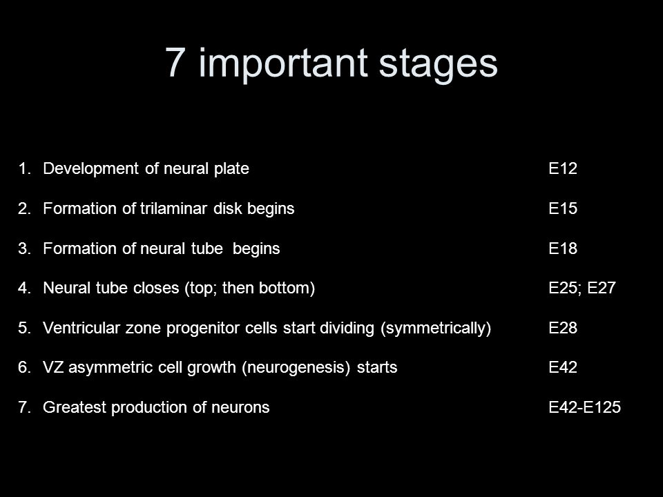 7 important stages 1.Development of neural plateE12 2.Formation of trilaminar disk beginsE15 3.Formation of neural tube beginsE18 4.Neural tube closes (top; then bottom)E25; E27 5.Ventricular zone progenitor cells start dividing (symmetrically)E28 6.VZ asymmetric cell growth (neurogenesis) startsE42 7.Greatest production of neuronsE42-E125