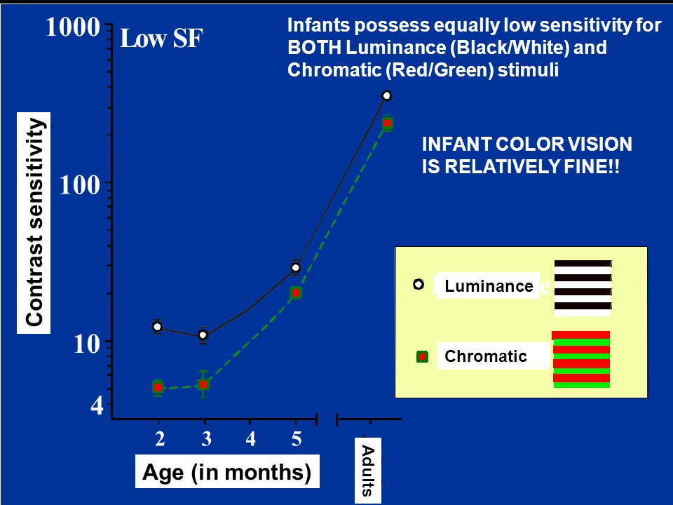 Infants possess equally low sensitivity for BOTH Luminance (Black/White) and Chromatic (Red/Green) stimuli INFANT COLOR VISION IS RELATIVELY FINE!.