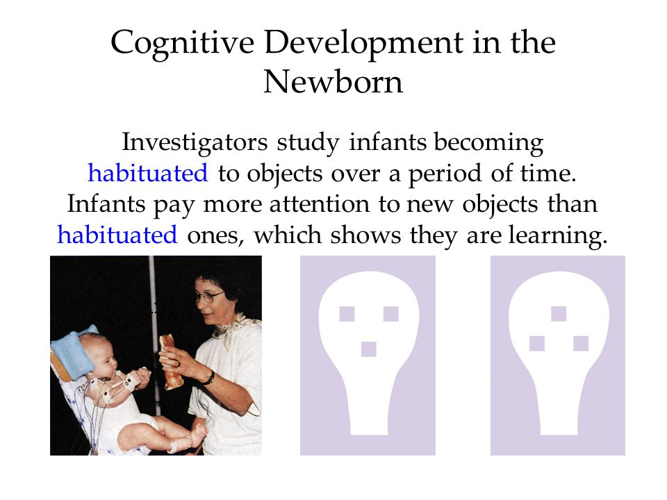 Cognitive Development in the Newborn Investigators study infants becoming habituated to objects over a period of time.
