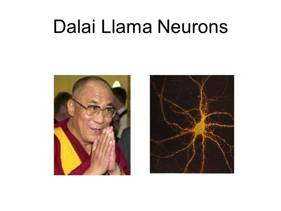 Dalai Llama Neurons