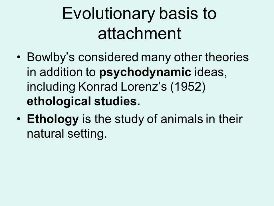 Evolutionary basis to attachment Bowlby's considered many other theories in addition to psychodynamic ideas, including Konrad Lorenz's (1952) ethologi