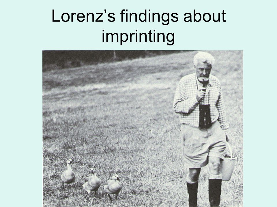 Lorenz's findings about imprinting