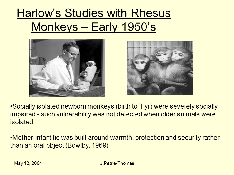 May 13, 2004J.Petrie-Thomas Harlow's Studies with Rhesus Monkeys – Early 1950's Socially isolated newborn monkeys (birth to 1 yr) were severely socially impaired - such vulnerability was not detected when older animals were isolated Mother-infant tie was built around warmth, protection and security rather than an oral object (Bowlby, 1969)