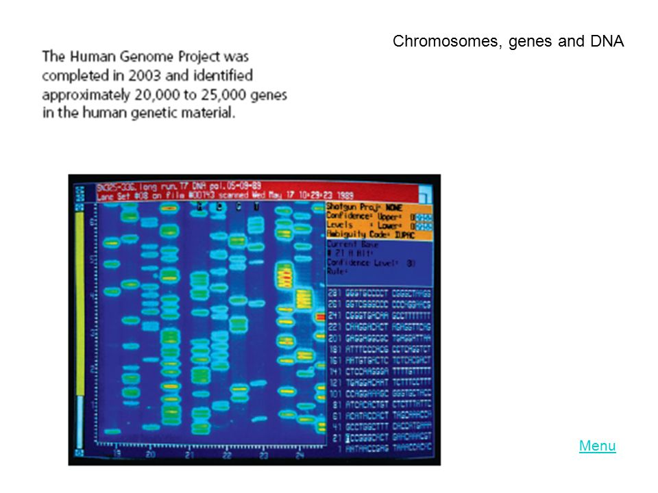 Menu Chromosomes, genes and DNA