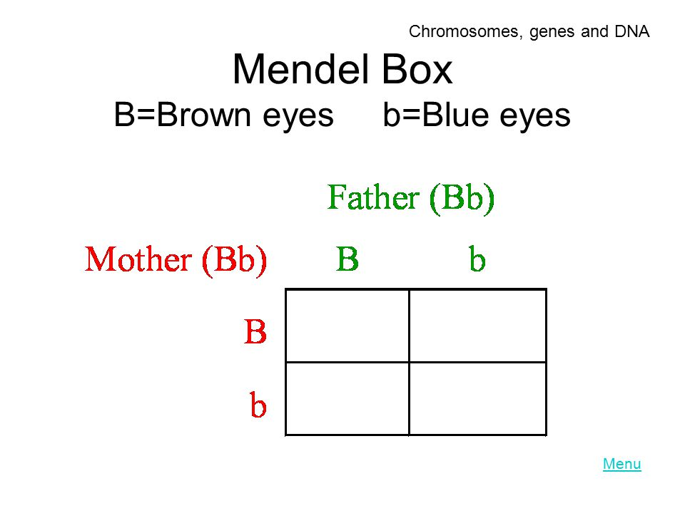 Mendel Box B=Brown eyes b=Blue eyes Menu Chromosomes, genes and DNA