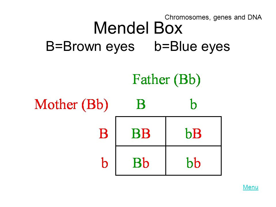 Mendel Box B=Brown eyes b=Blue eyes Chromosomes, genes and DNA Menu
