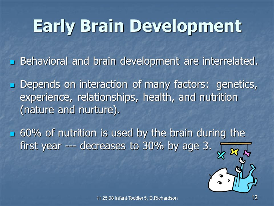 12 Early Brain Development Behavioral and brain development are interrelated. Behavioral and brain development are interrelated. Depends on interactio