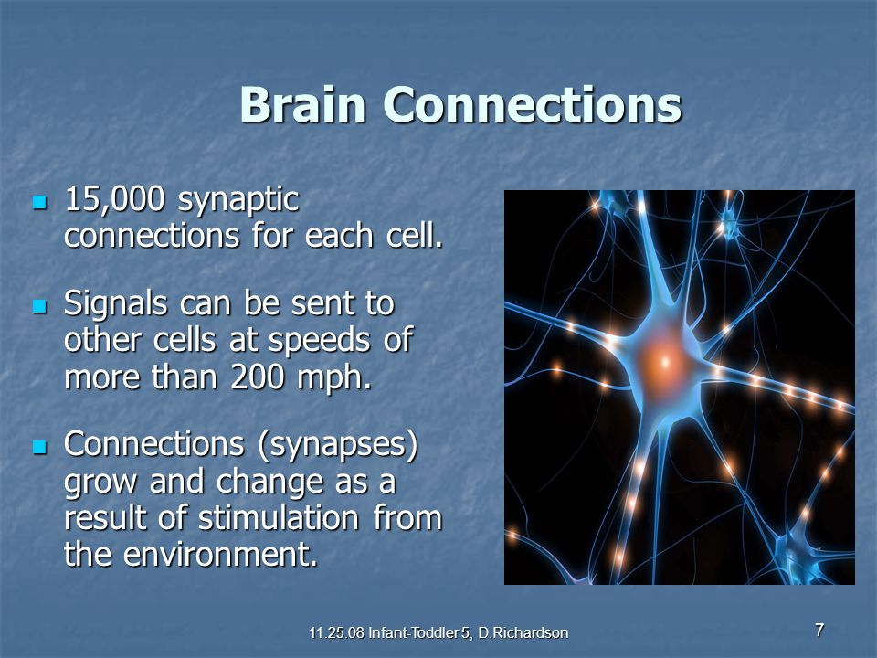 Brain Connections Brain Connections 15,000 synaptic connections for each cell. 15,000 synaptic connections for each cell. Signals can be sent to other