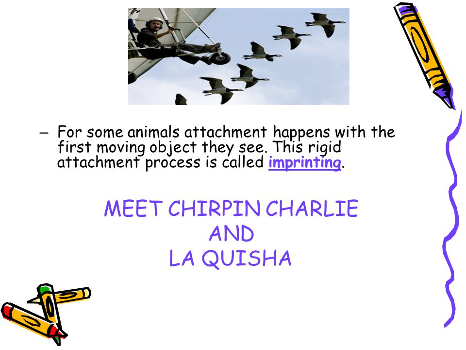 – For some animals attachment happens with the first moving object they see. This rigid attachment process is called imprinting. MEET CHIRPIN CHARLIE