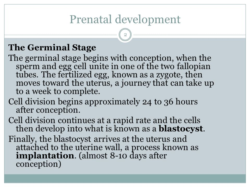 Prenatal development The Germinal Stage The germinal stage begins with conception, when the sperm and egg cell unite in one of the two fallopian tubes