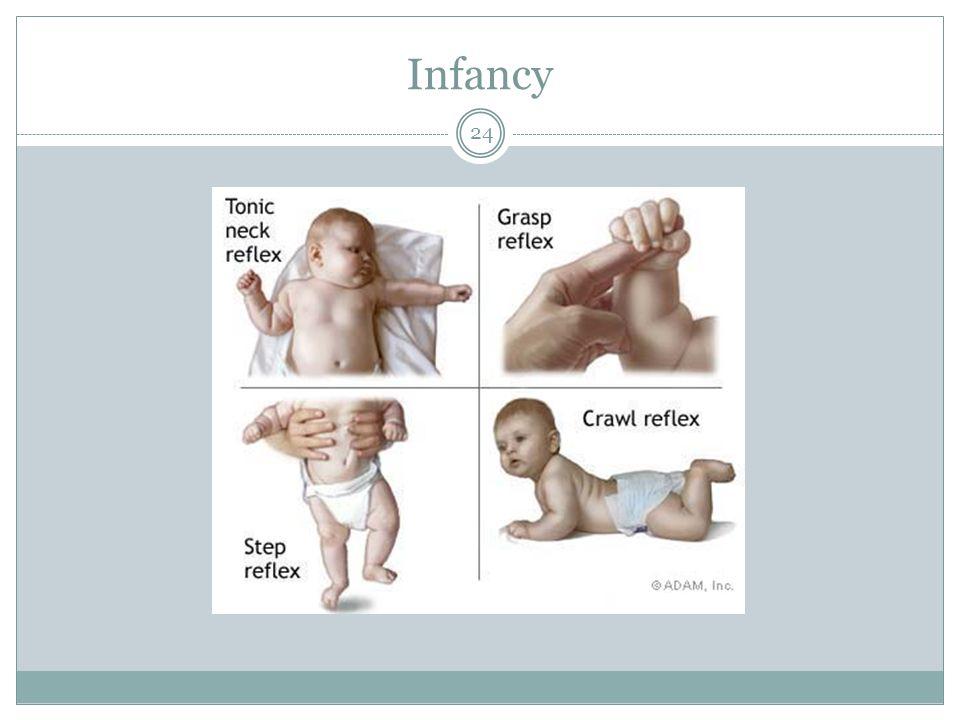 Infancy 24