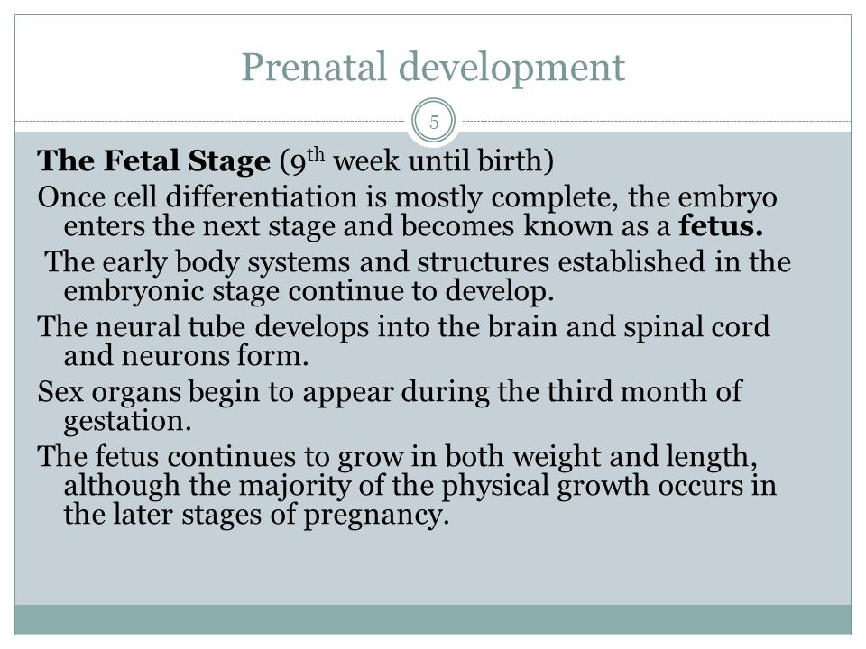 Prenatal development The Fetal Stage (9 th week until birth) Once cell differentiation is mostly complete, the embryo enters the next stage and become