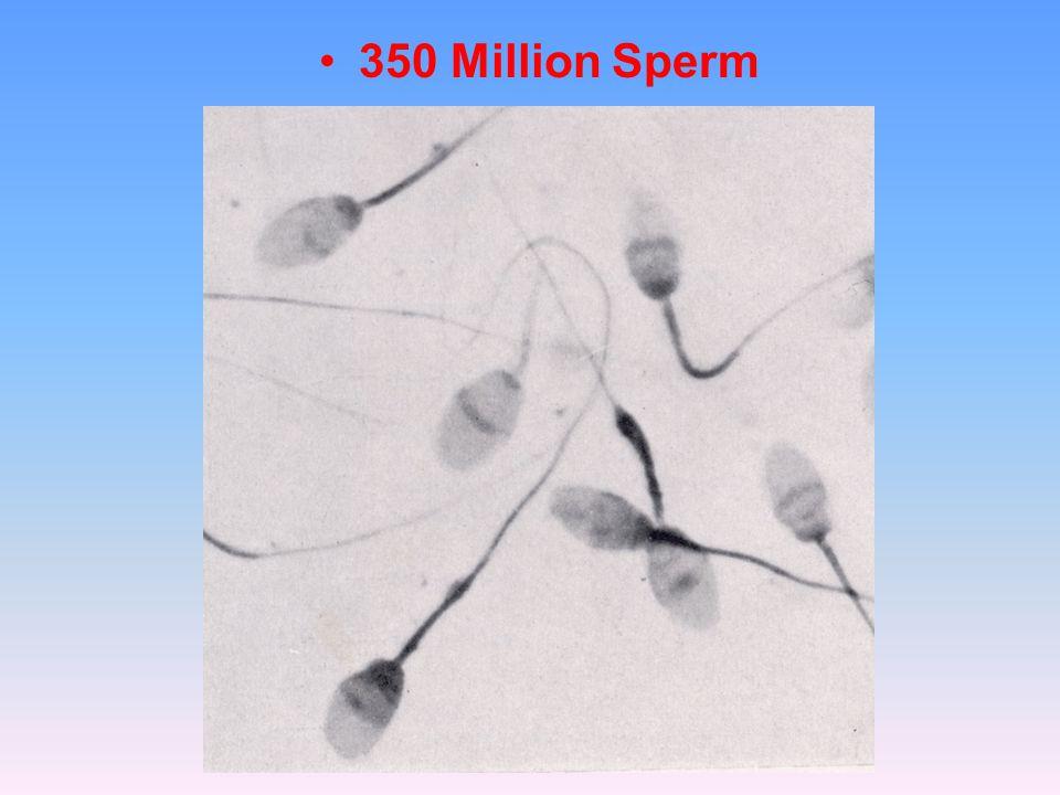 350 Million Sperm