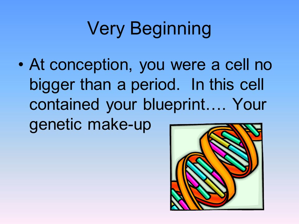 Very Beginning At conception, you were a cell no bigger than a period.