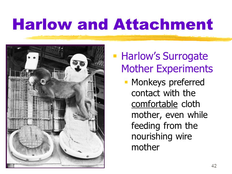42 Harlow and Attachment  Harlow's Surrogate Mother Experiments  Monkeys preferred contact with the comfortable cloth mother, even while feeding fro