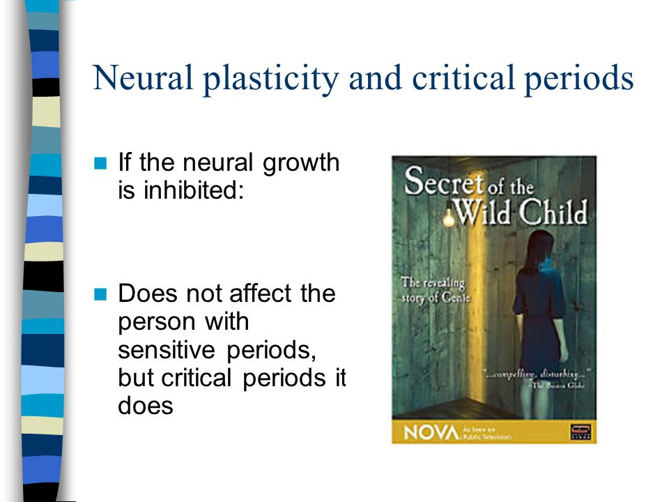 Neural plasticity and critical periods If the neural growth is inhibited: Does not affect the person with sensitive periods, but critical periods it does