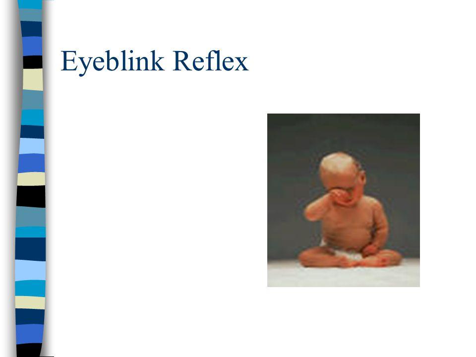 Eyeblink Reflex