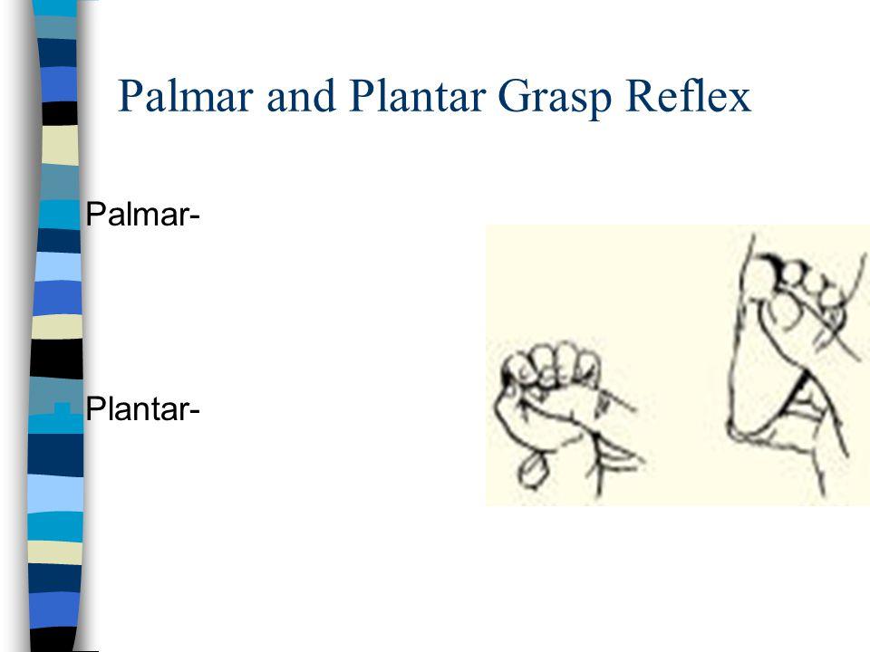 Palmar and Plantar Grasp Reflex Palmar- Plantar-