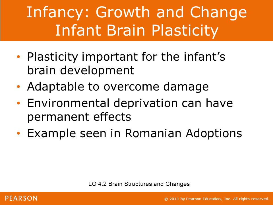 © 2013 by Pearson Education, Inc. All rights reserved. Infancy: Growth and Change Infant Brain Plasticity Plasticity important for the infant's brain