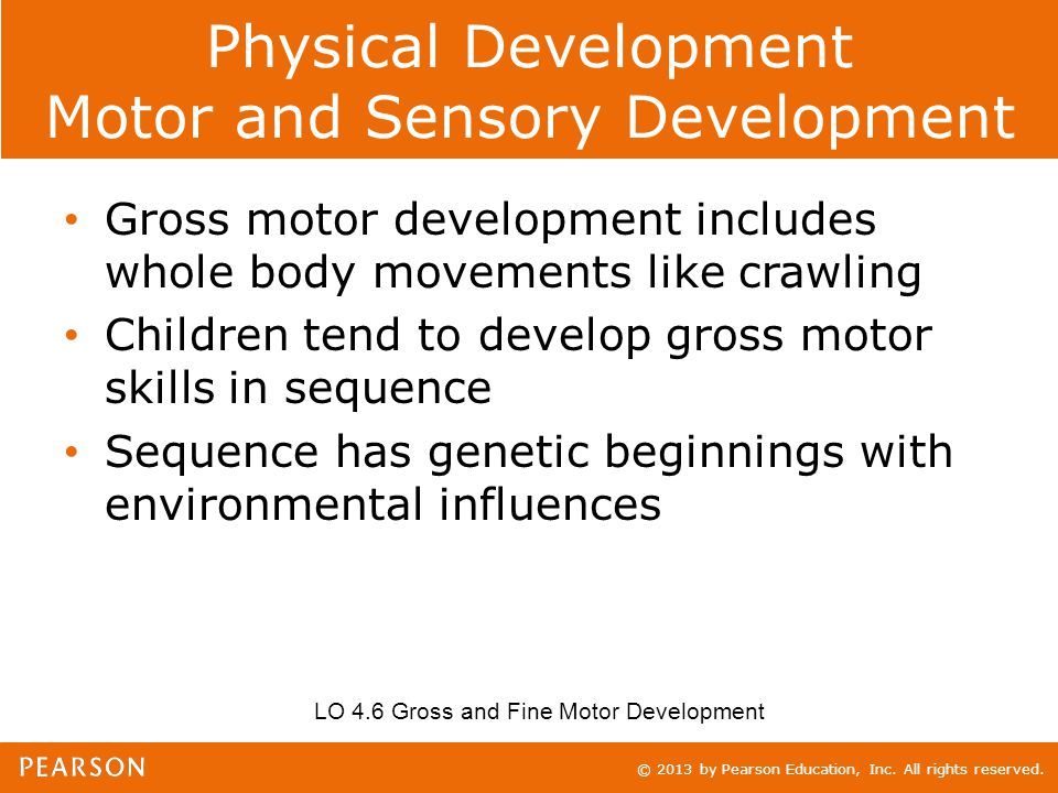 © 2013 by Pearson Education, Inc. All rights reserved. Physical Development Motor and Sensory Development Gross motor development includes whole body