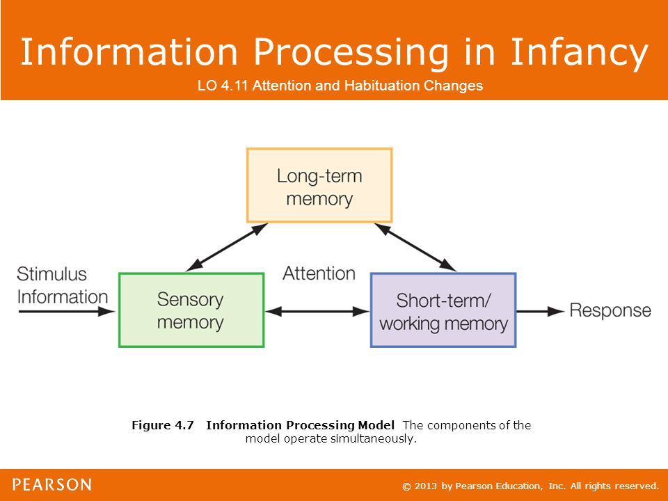 © 2013 by Pearson Education, Inc. All rights reserved. Information Processing in Infancy LO 4.11 Attention and Habituation Changes Figure 4.7 Informat