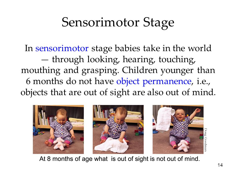 14 Sensorimotor Stage In sensorimotor stage babies take in the world — through looking, hearing, touching, mouthing and grasping.