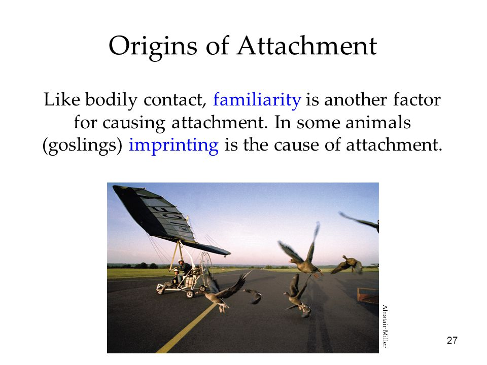 27 Origins of Attachment Like bodily contact, familiarity is another factor for causing attachment.