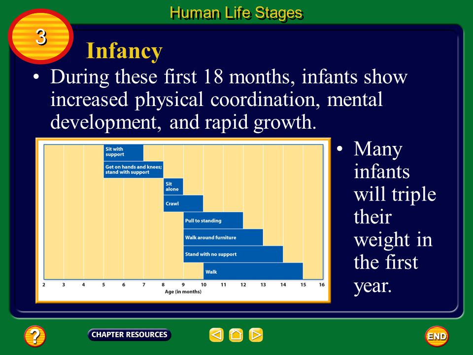 Infancy The first four weeks after birth are known as the neonatal (nee oh NAY tul) period.