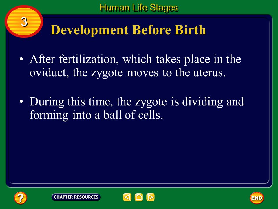Zygote Formation Once a sperm has entered the egg, changes in the electric charge of the egg s membrane prevent other sperm from entering the egg.