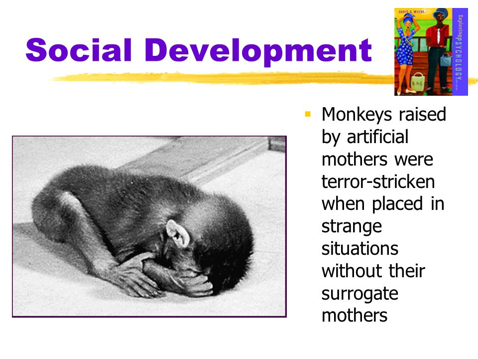 Social Development  Monkeys raised by artificial mothers were terror-stricken when placed in strange situations without their surrogate mothers