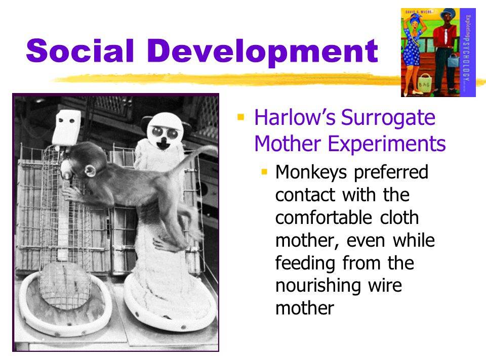 Social Development  Harlow's Surrogate Mother Experiments  Monkeys preferred contact with the comfortable cloth mother, even while feeding from the
